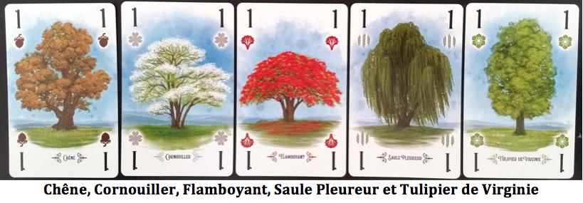 Test jeu Arboretum
